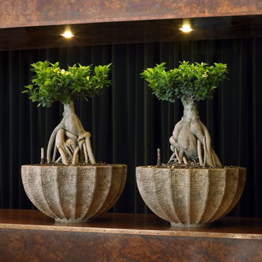 Grün in Räumen - Bürobegrünung vom Profi  %GerhardtBlumen